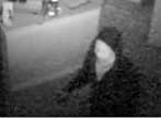 Image: surveillance photo